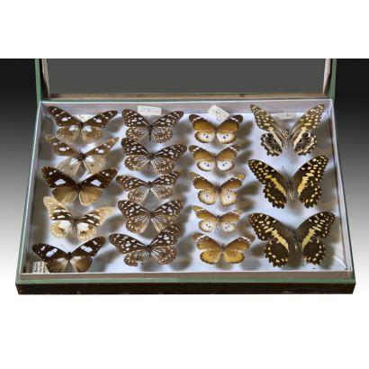 Objetos. Colección de 18 mariposas, ppios. S. XX.