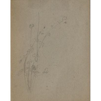 "MEIFRÉN Y ROIG, Eliseo (Barcelona, 1859-1940). Pencil drawing on paper. ""Flowers"". 25x22cm s / m 10x12,5cm."