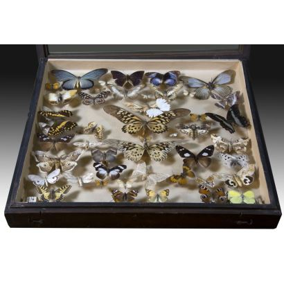 Collection of butterflies and insects, S. XX.