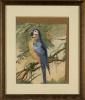 ¨Loro azul¨. E. Vannier. Se trata de una acuarela, que aparece firmada y fechada por el propio autor en el ángulo inferior izquierdo. Está enmarcado. 29 x 23 cm.